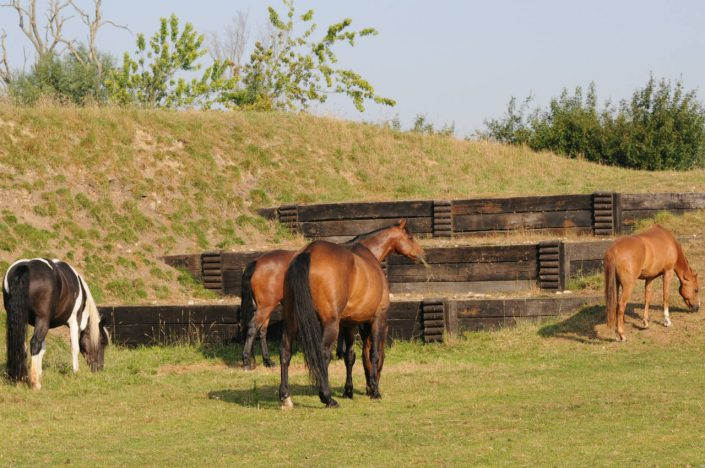 Grove House Farm Equestrian Centre